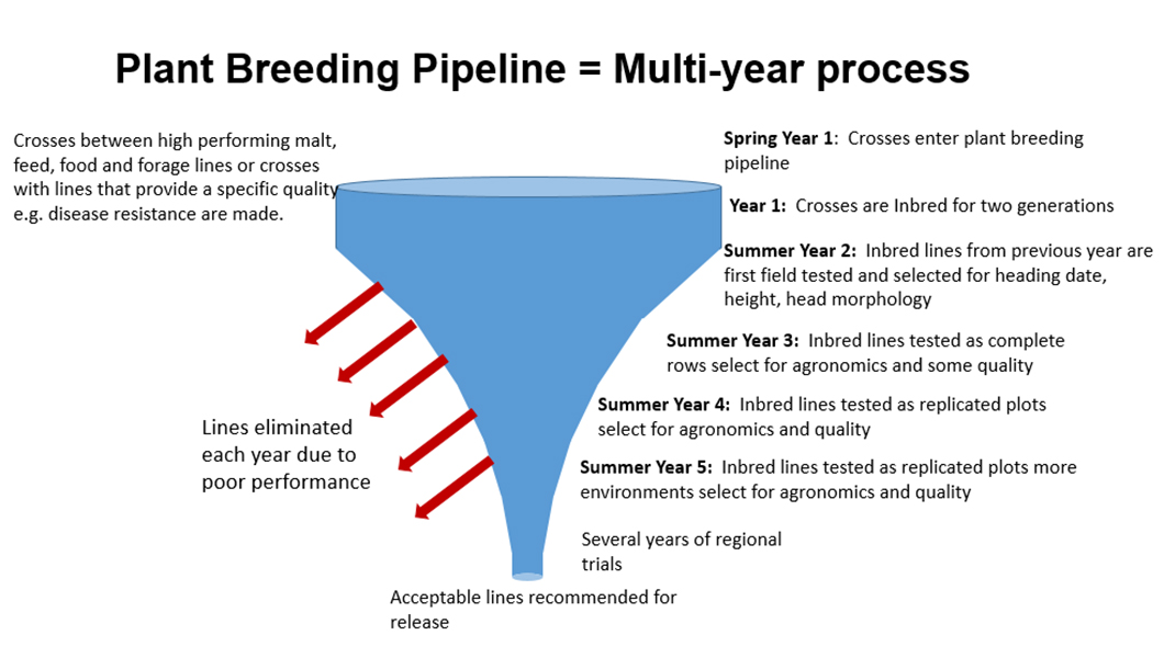 Barley breeding program pipeline