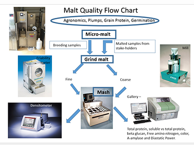 Malt Quality Flow Chart