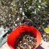 Orange bucket containing plant matter next to live plants