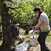 Charles Hart and Kayla Arend search for wood-boring beetles in an Eastern Montana forest. (Photo by Frank Etzler).