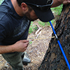 Greg Pederson of the U.S. Geological Survey examines a tree ring core from the Mission Mountains on the Flathead Indian Reservation. (Photo by Dave McWethy).