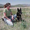 Alice Whitelaw sits beside Camas and the noxious weed he is being trained to find: dyers woad in Beaverhead County, Montana June 1, 2007. MSU photo by Carol Flaherty