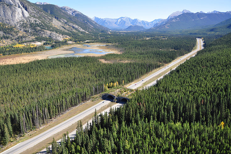 "Aerial view of Wolverine Overpass and the Trans-Canada Highway in Banff National Park, Alberta, Canada, where scientists with the Western Transportation Institute at Montana State University have been studying the impact of wildlife crossing structures on area bears. The photo is featured on the cover of the British journal ""Proceedings of The Royal Society B,"" which has published a paper co-authored by former MSU graduate student Michael Sawaya, MSU professor Steven Kalinowski and WTI researcher Tony Clevenger. Photo by A.T. Ford, Western Transportation Institute at Montana State University."