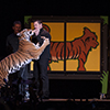 Bozeman-based magician Jay Owenhouse kicks off convocation events as he makes a live tiger appear on stage in honor of the Life of Pi book character Richard Parker.