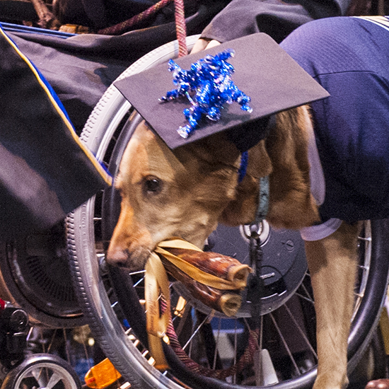 MSU President Waded Cruzado and civil engineering graduate Flynn Murray react to Murray's service dog Layla as she receives her own special reward from MSU.
