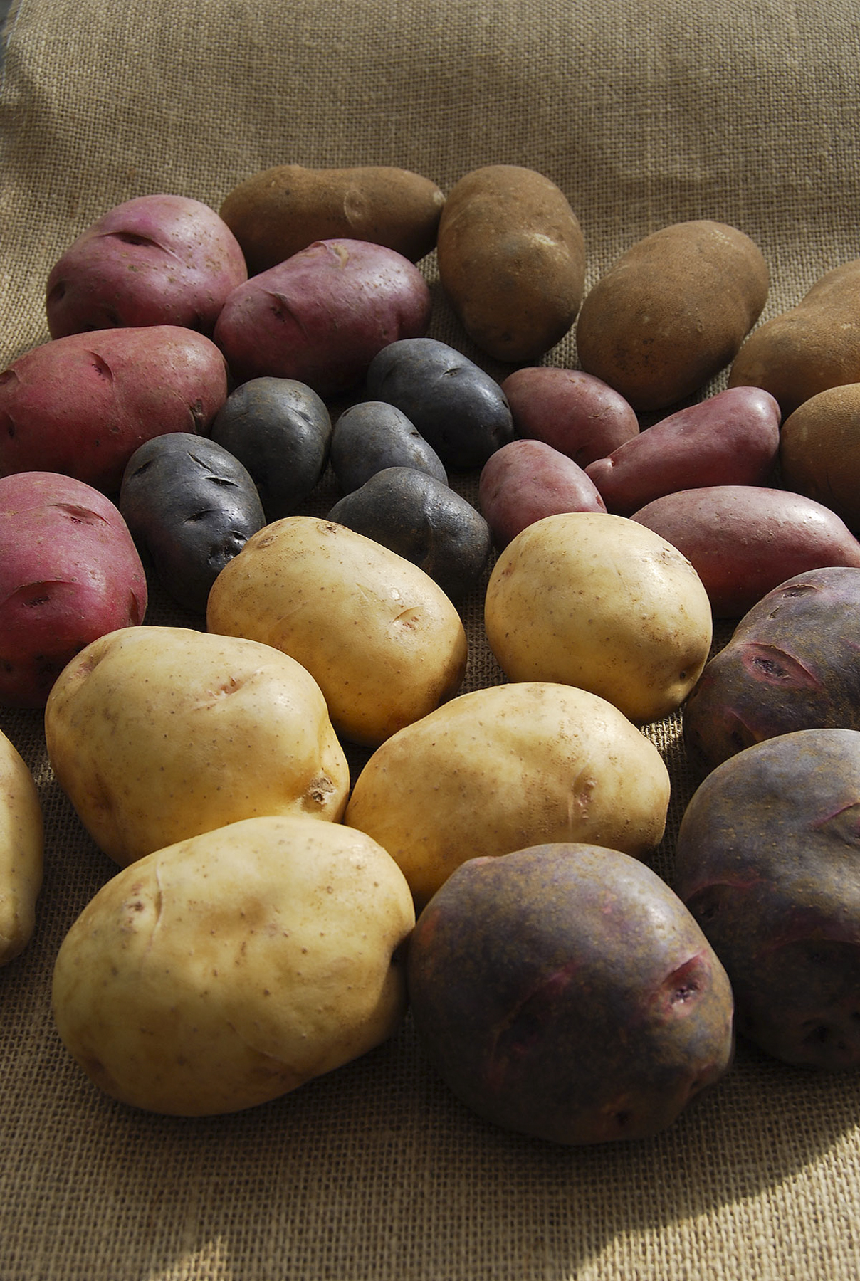 Montana certified seed potatoes available at local nurseries, garden ...