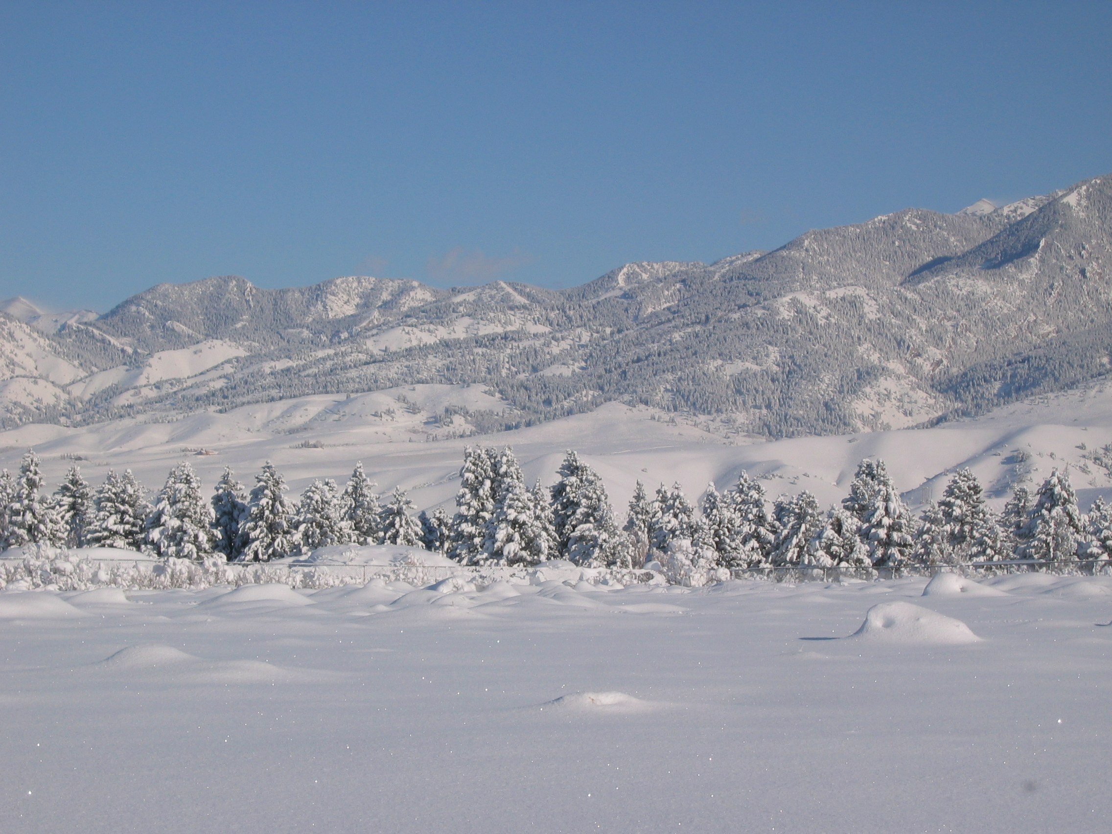 Bozeman Winter