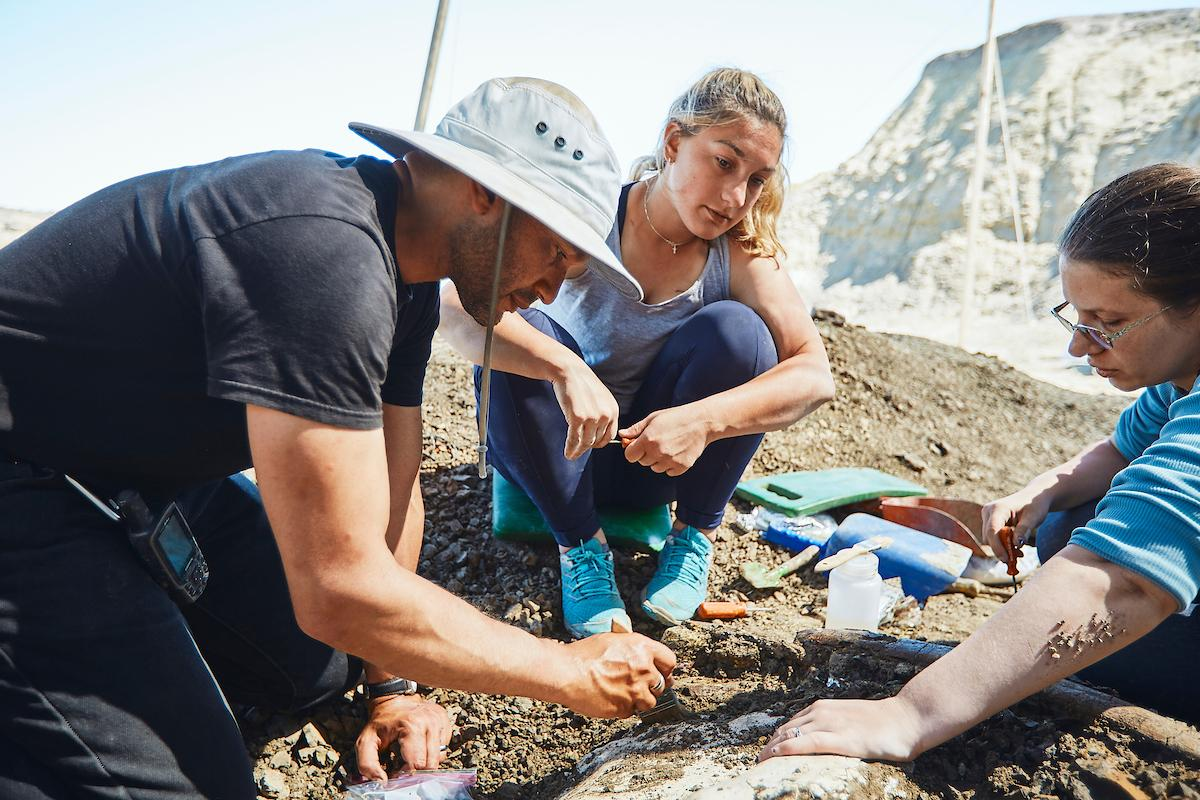 John Scannella, the John R. Horner curator of paleontology with the Museum of the Rockies at Montana State University, participates in an excavation of fossil bones of a triceratops along with Scott Williams, paleontology and lab field specialist, and volunteers and MSU undergraduate students, Thursday, July 18, 2019, near Ekalaka, Mont.  MSU Photo by Adrian Sanchez-Gonzalez
