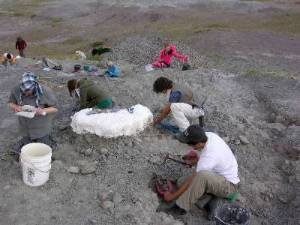 Students engaged in a paleontologic dig