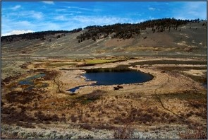 Image of Blacktail Pond, Yellowstone National Park