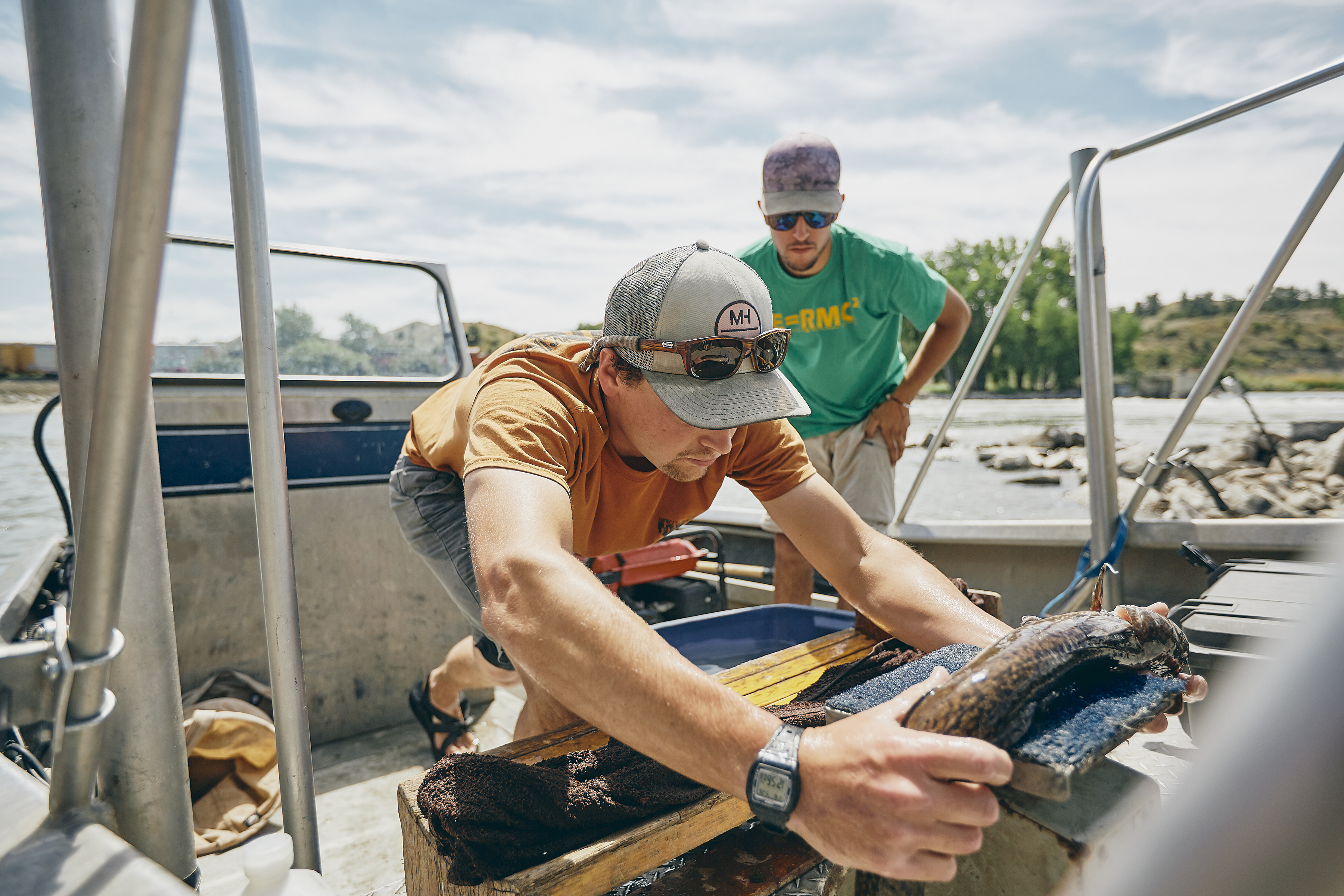 Ian weighs a burbot on the boat at the Huntley Fish Bypass on the Yellowstone River