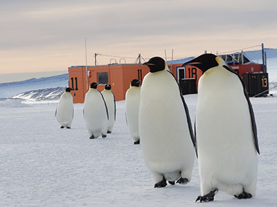 penguins in front of field trailer on ice