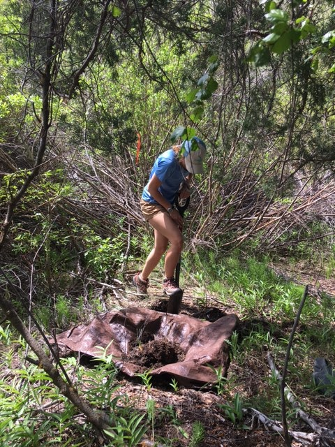 Kinzie Bailey digging a hole in the forest