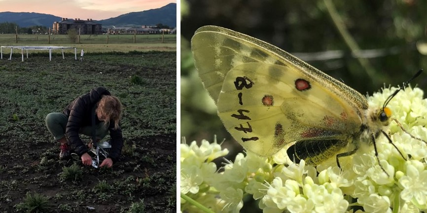 Field Tech and butterfly