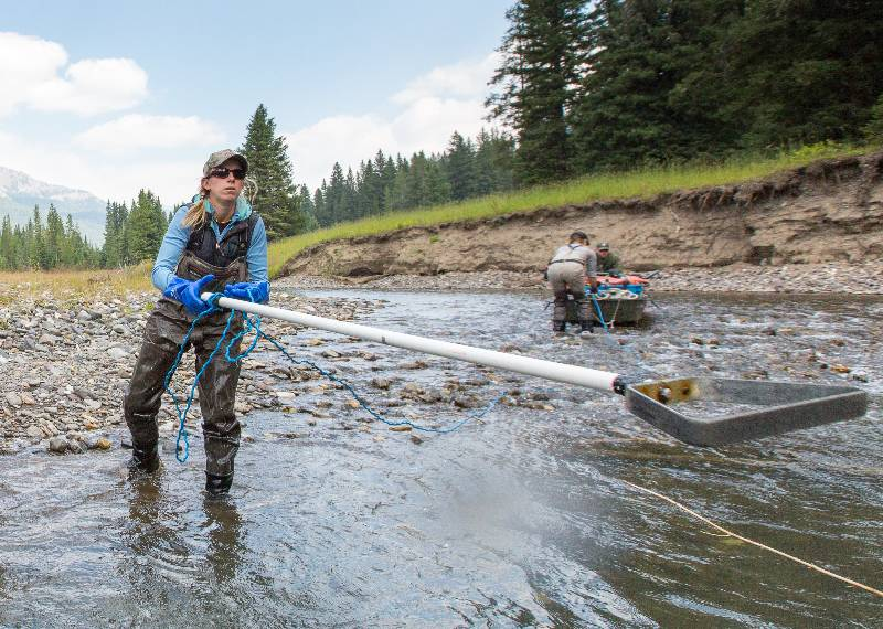 Colleen electrofishing in Yellowstone National Park