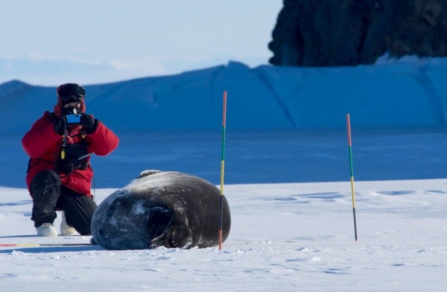 Jamie Brusa with Weddell seal in Antarctica