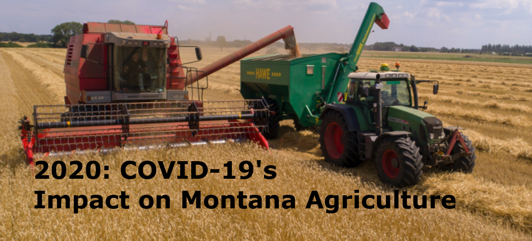 """MSU Department of Agricultural Economics and Economics and MSU Extension will host the 2020 Annual Agricultural Economics Outlook Conference """"2020: COVID-19's Impact on Montana Agriculture"""" on Friday, November 13th.  This year's event will be free and open to the public and will be a virtual conference this year."""