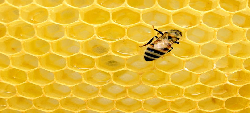 DAEE economist publishes research on the economics of colony collapse disorder