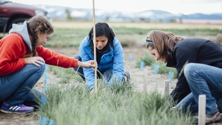 three women collecting data on a grass plot