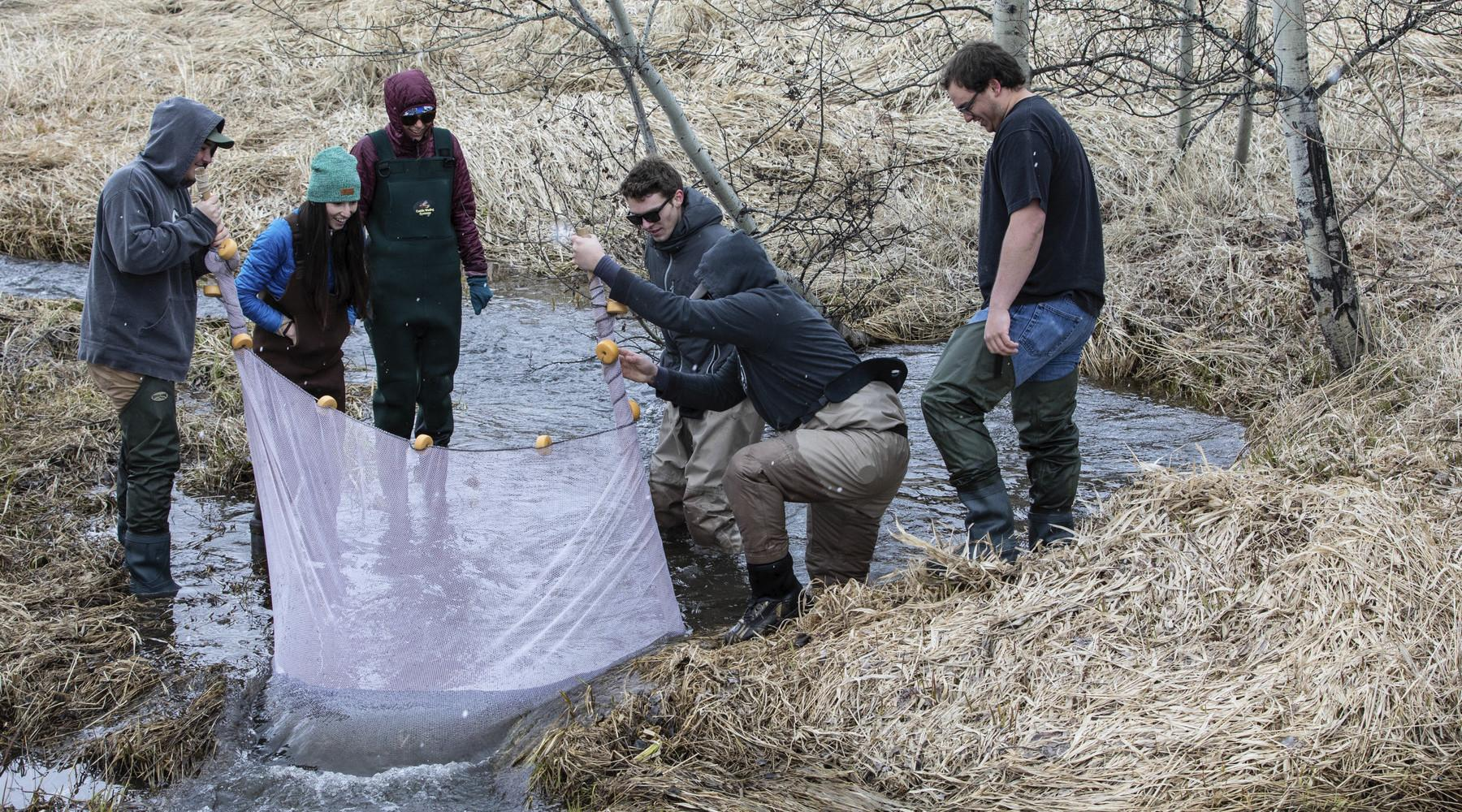 Students work in a stream during a class in the field
