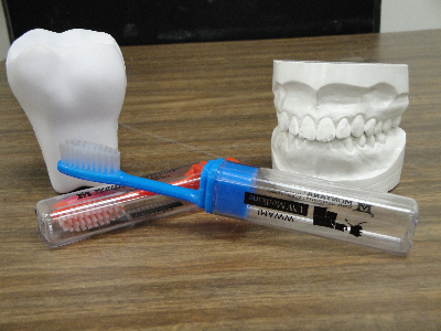 Toothbrushes, teeth, and jaw