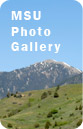 MSU Photo Gallery