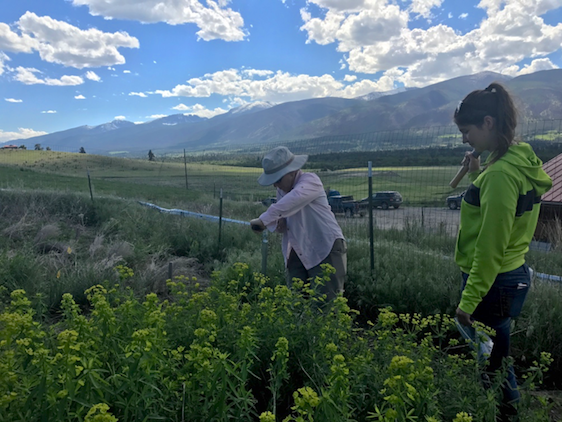 IoE affiliates and their students engage in hands-on research across Montana