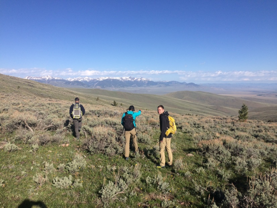 Students and advisors sample for pikas as part of the 2018 IoE Undergraduate Summer Research program