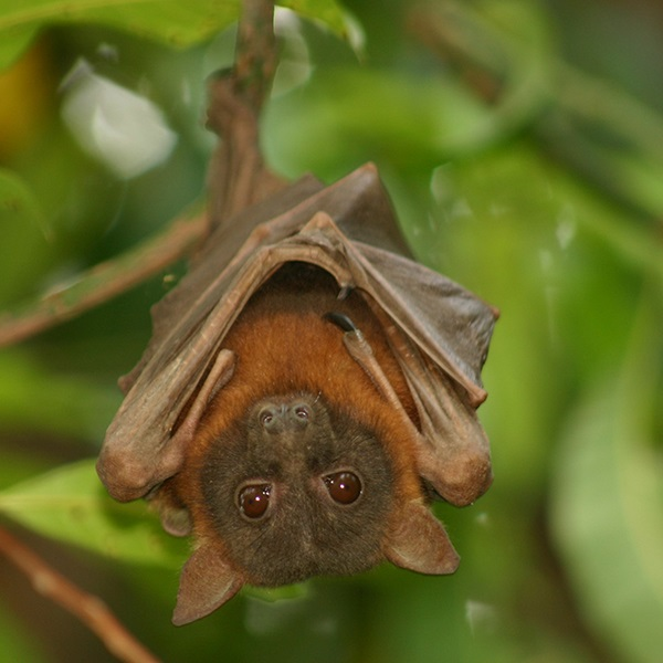Bat in tree
