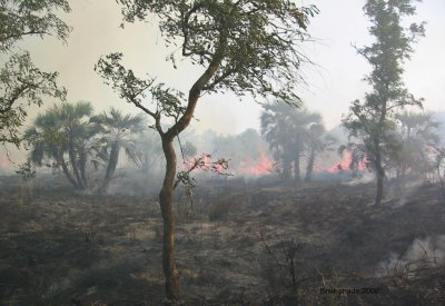 Fire in Miombo woodland, Mozambique