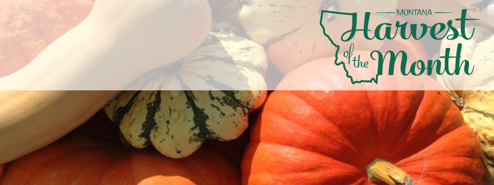 Photo of winter squash varieties with green Harvest of the Month logo