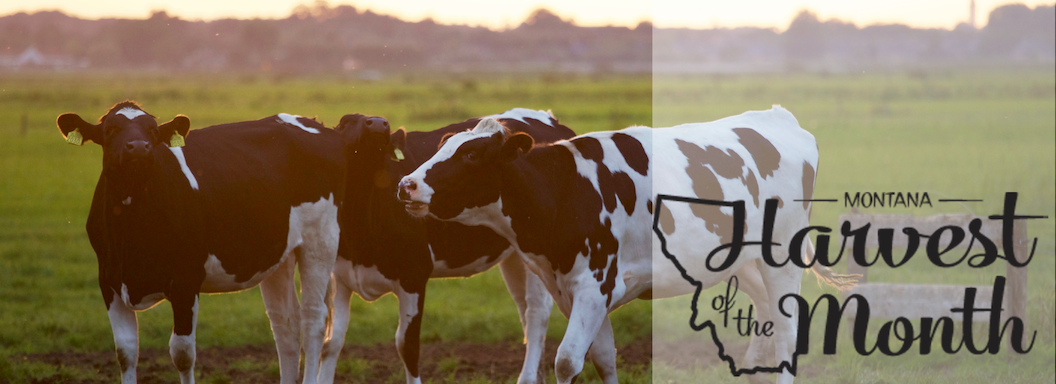 Photo of dairy with Harvest of the Month logo.