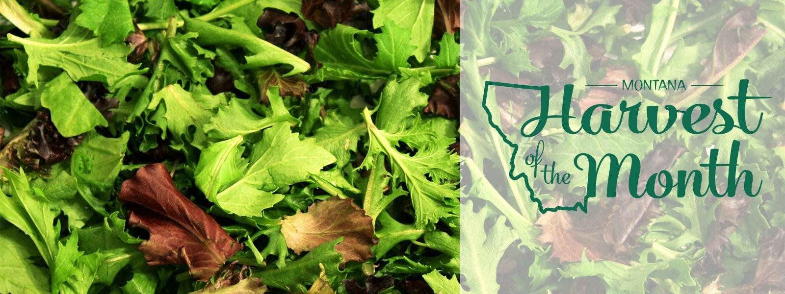 Photo of leafy greens with Montana Harvest of the Month logo in green