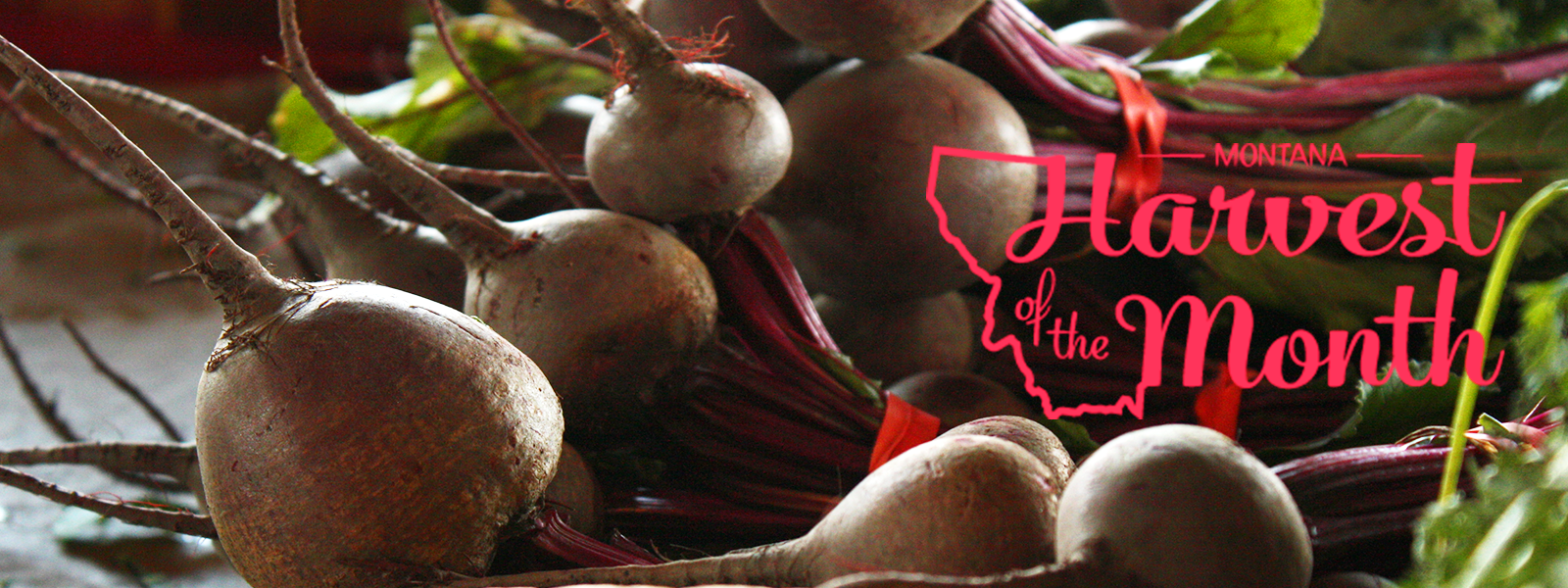 Beets are February's Harvest of the Month!