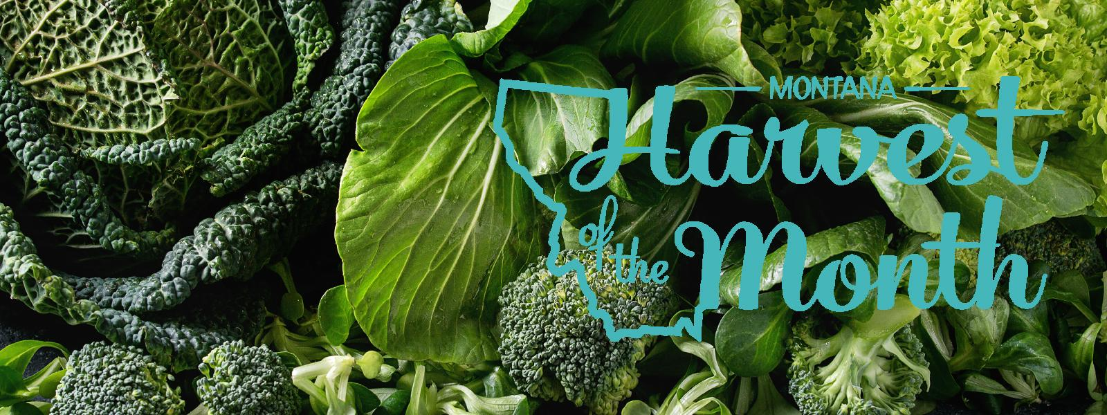 September's Montana Harvest of the Month food is Brassicas!