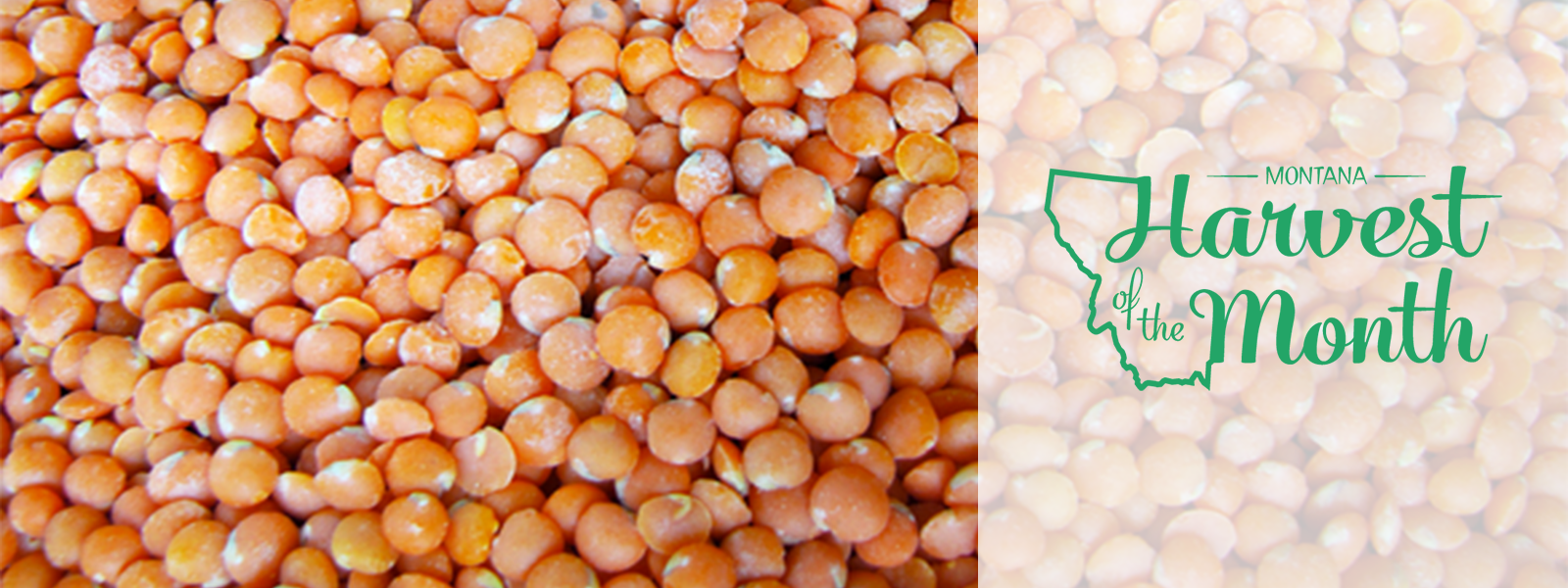 Enjoy lentils as this month's Harvest of the Month!