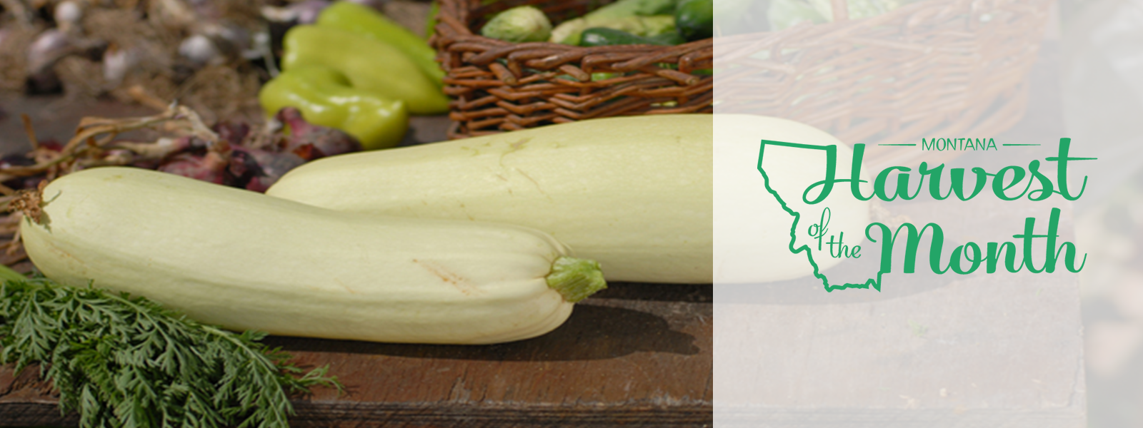 Enjoy summer squash as this month's Harvest of the Month!