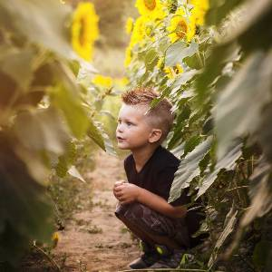 young boy in sunflowers