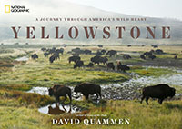 A Journey Through America's Wild Heart: Yellowstone