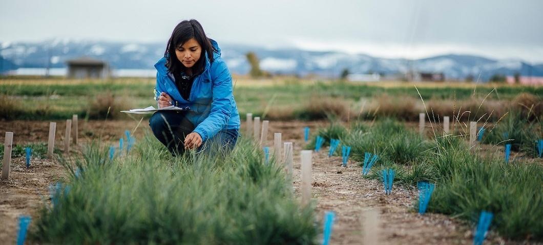 Woman in garden plot