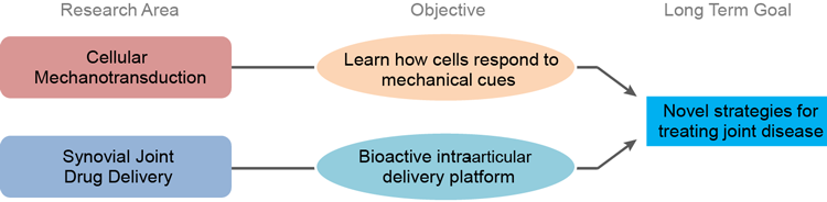 Diagram illustrating the convergence of cellular mechanotransduction and synovial join drug delivery research to develop novel strategies for treating joint disease