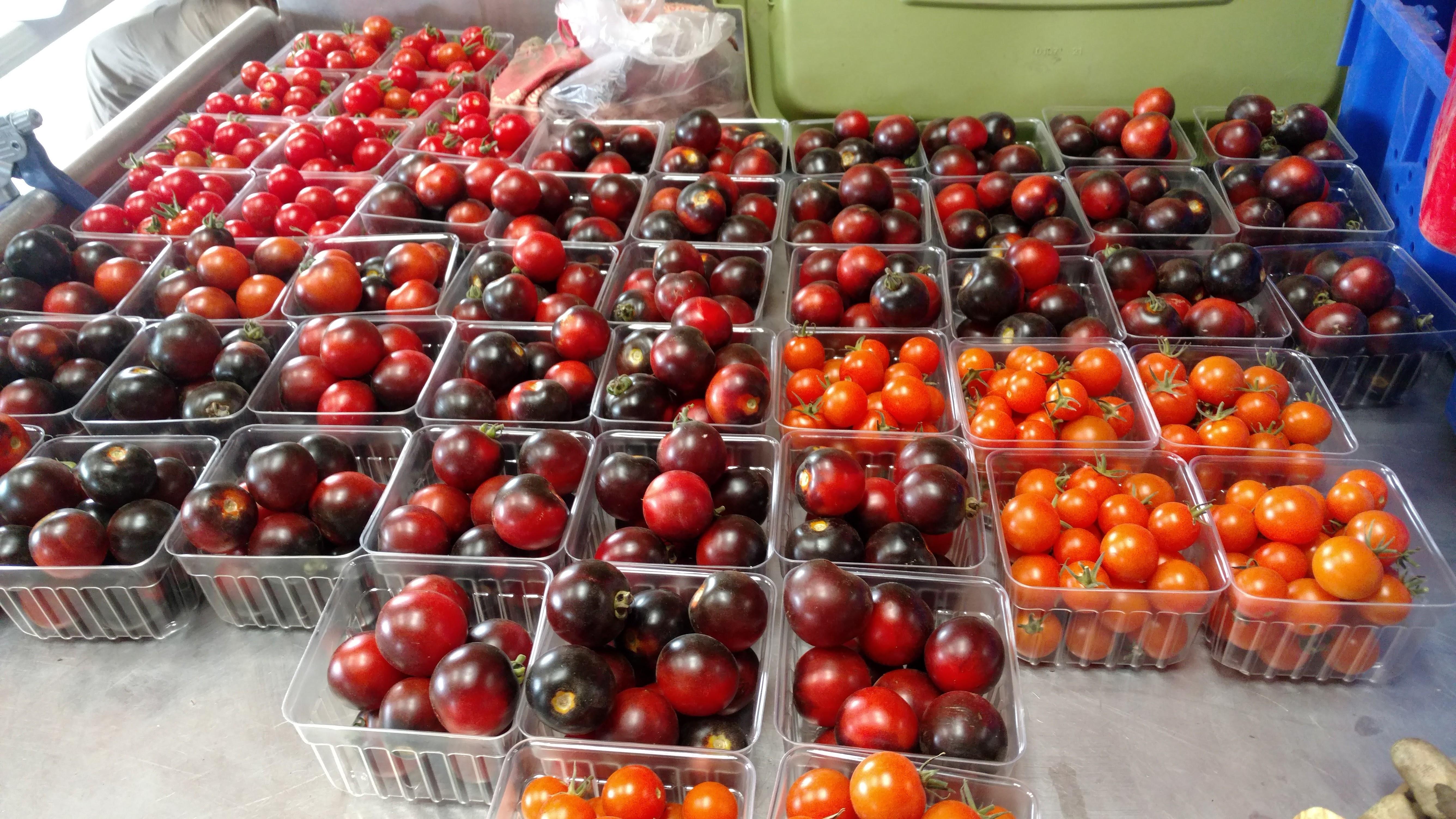 Cherry Tomato Varieties