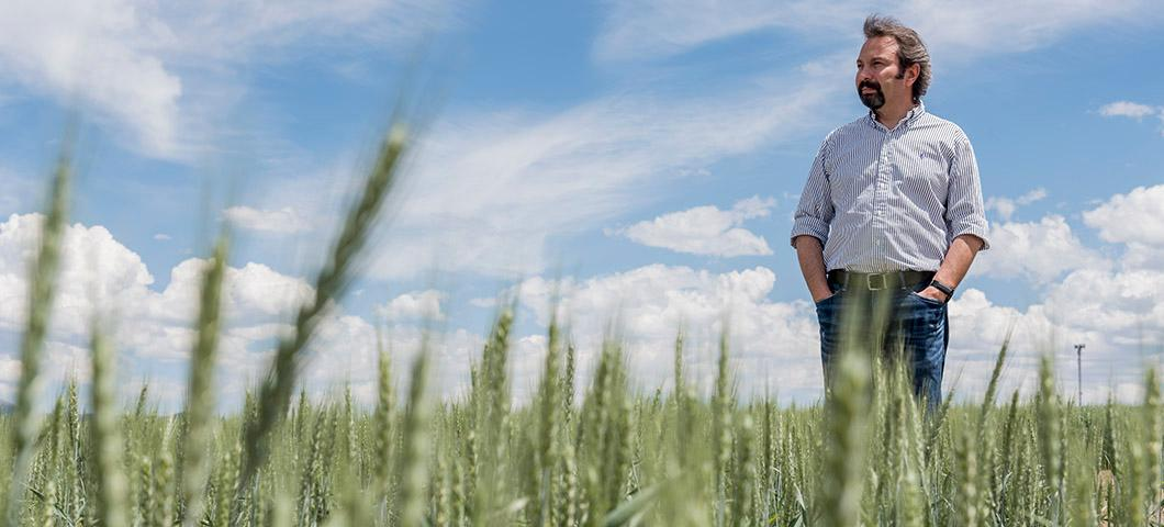 Hikmet Budak stands in a field of durum wheat