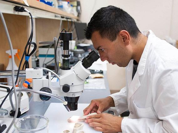 Senior anthropology major, Michael Ruiz, is in his white lab coat and looking through a microscope at various bones.