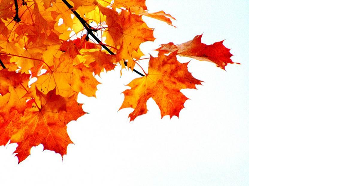Image of fall leaves.